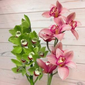 Орхидеи поштучно