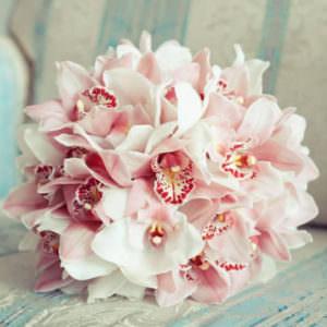 15 Розовых Орхидей